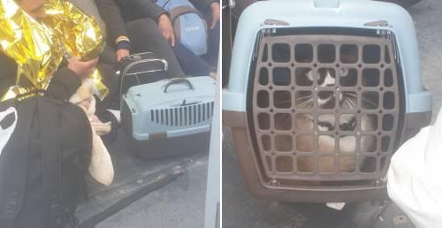 I folli sbarchi di Lampedusa: arrivano persino con il gatto