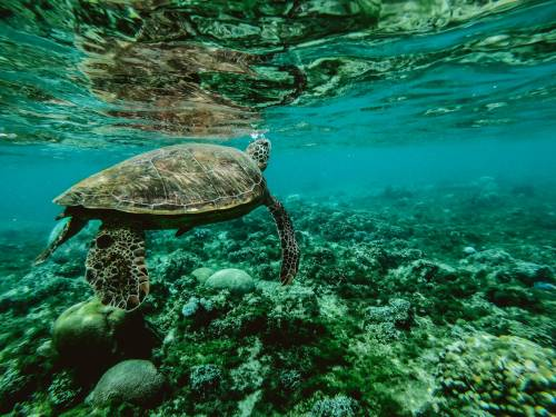 Il pasto poi il decesso: 19 muoiono intossicati dalla carne di tartaruga