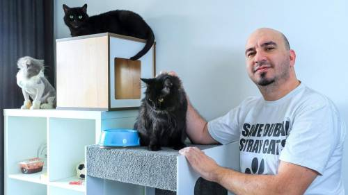 L'uomo che sta salvando cani e gatti da una strage