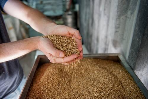 Orzo, il cereale dall'effetto purificante