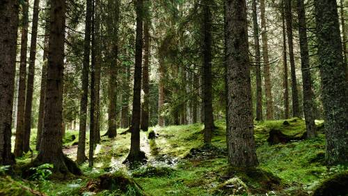 """""""Il caro prezzi del legno si combatte salvaguardando il bosco"""""""