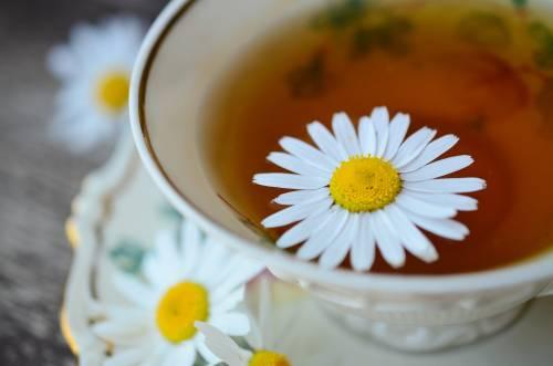 Camomilla, proprietà, usi e benefici di questo fiore