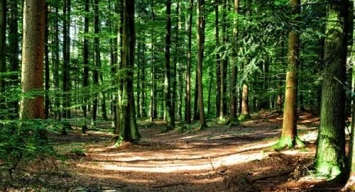 FederlegnoArredo e Forest Sharing insieme per valorizzare il legno italiano