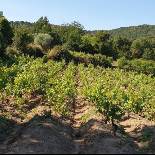 Vado in vigna e torno: la storia di Neoneli, città del vino e di un nuovo umanesimo