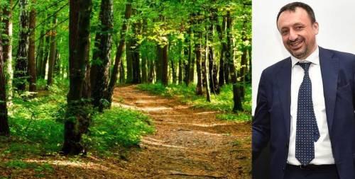Federlegno e Uncem: insieme per il rilancio dell'economia del bosco