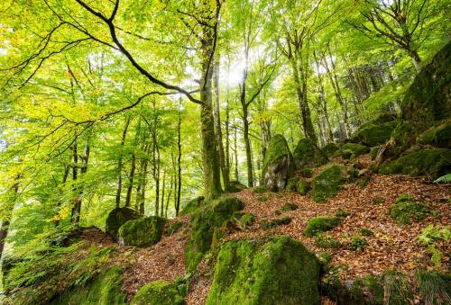 """Assolegno: """"Gestione dei boschi, bene gli accordi di foresta"""""""