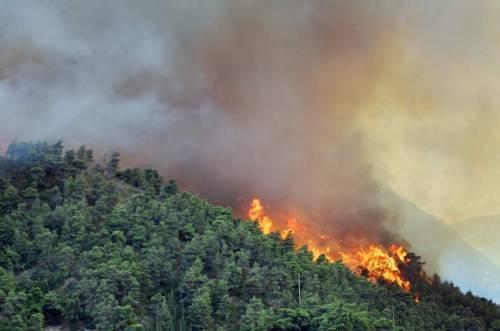 """Assolegno: """"Gestire i boschi per prevenire gli incendi"""""""