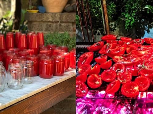 Passata di pomodoro casalinga, ecco i maestri del gusto