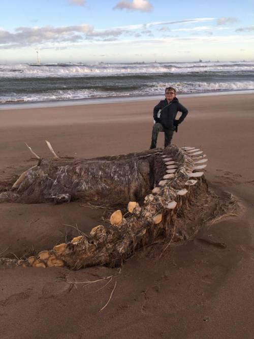 Scozia, la tempesta Ciara fa riemergere uno scheltro gigante e c