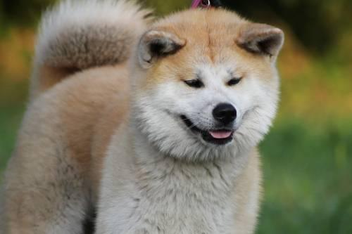 Neonato azzannato al volto dal cane di famiglia mentre era in braccio allla madre