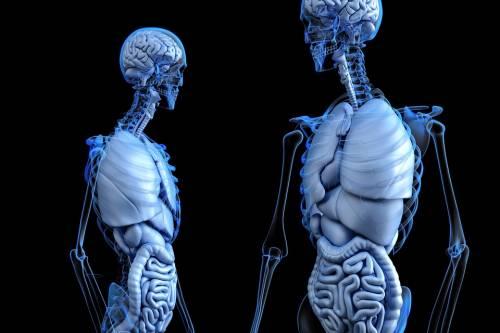 La vitamina C alleata contro l'osteoporosi