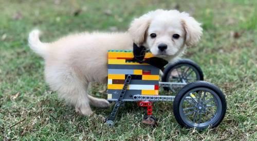 Gracie e la sedia a rotelle costruita con il Lego da un bamb