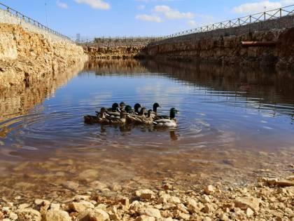 Bari, le anatre nuotano e depongono uova nell'acquedotto pugliese