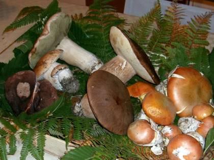 Funghi velenosi: ecco i consigli per non intossicarsi