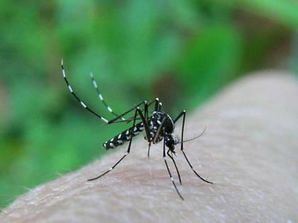 Pruriti estivi: nord-ovest<br /> invaso da zanzare tigre