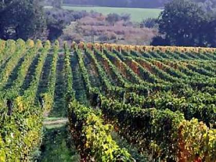 Muore di fame fra le vigne: in tasca 30mila euro