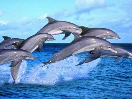 Elefanti e delfini stuprano. E la colpa è dello stress