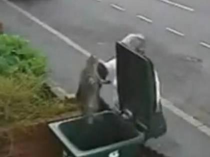 Gb, getta il gatto in un cassonetto<br /> Ora è caccia alla &quot;killer dei gatti&quot;