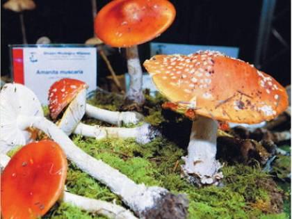 E' allarme funghi:<br /> record intossicati