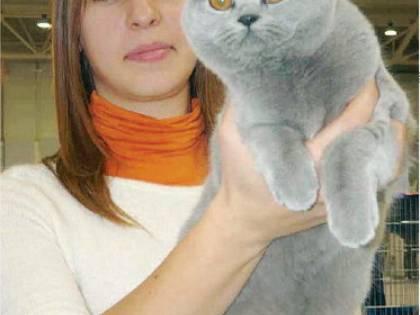 Parma, strage di gatti: caccia al killer
