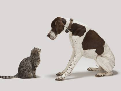 Regole milanesi: quando il gatto<br /> litiga con il cane finisce giù dai bus