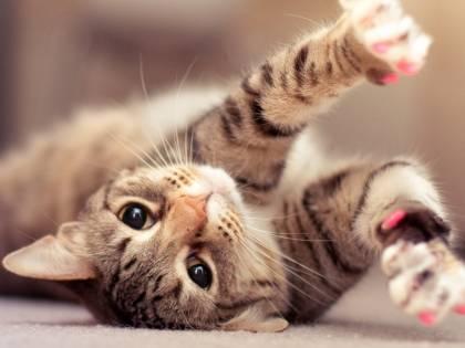 I gatti più belli del mondo sfilano a Bari