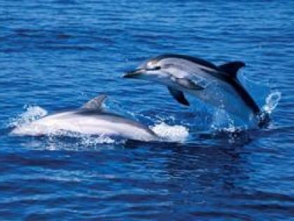 Microchip su ali e coda: delfini e topi come 007