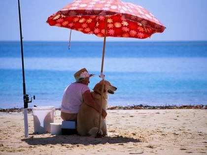 """Fiumicino, il Tar dice """"no"""" al libero accesso dei cani in spiaggia"""