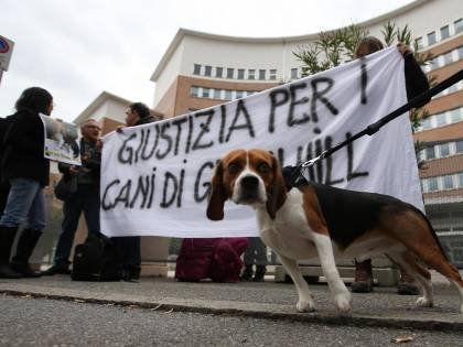 Giustizia è fatta per i cani di Green Hill