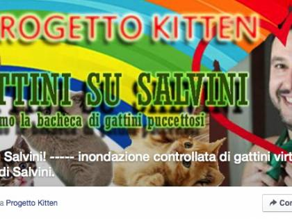 Il web si scatena: sulla pagina Facebook di Salvini l'invasione dei gattini