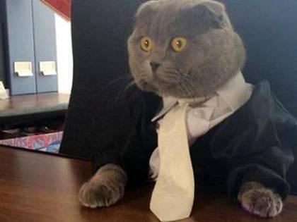 Budapest, in 700 per un colloquio di lavoro, ma viene assunto un gatto