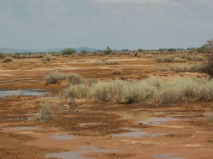 Una settimana nel deserto, sopravvive mangiando formiche
