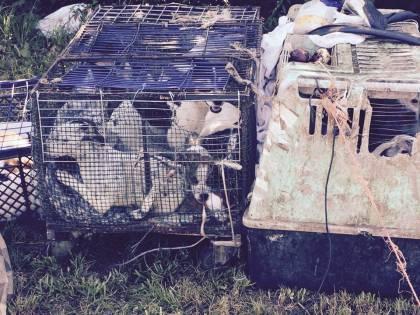 Orrore nel campo rom: il lager dei cani rinchiusi in gabbia come conigli