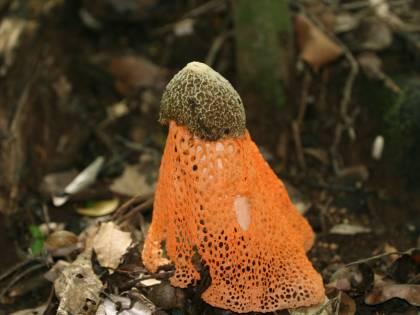 Nelle Hawaii cresce un fungo che provoca l'orgasmo femminile