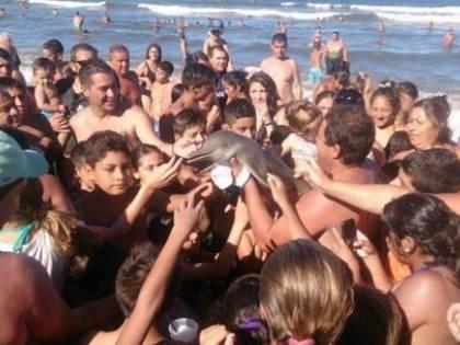 Tragica fine per il delfino: i turisti volevano un selfie
