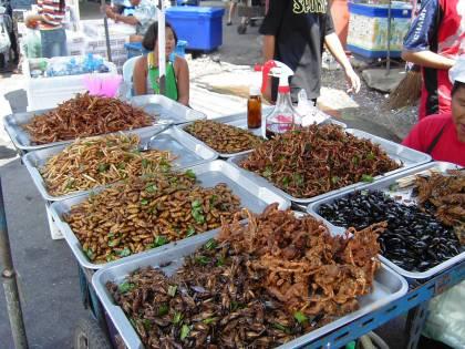 """Nasce """"Insecta"""": il primo allevamento di grilli italiano"""