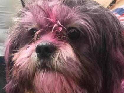Pitturano un cane di rosa, il web si scatena