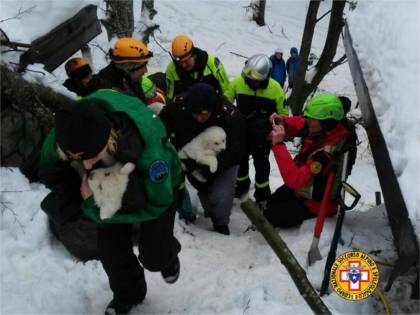 Ritrovati vivi i tre cuccioli maremmani Erano rifugiati nelle caldaie dell'hotel