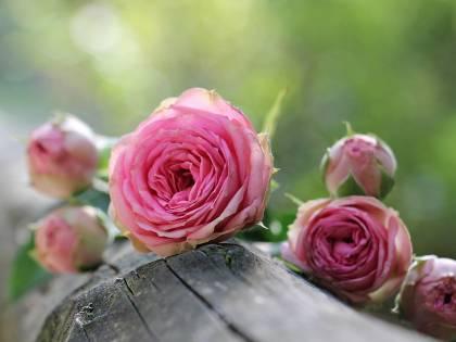 Acqua di rose: così la natura si prende cura della bellezza