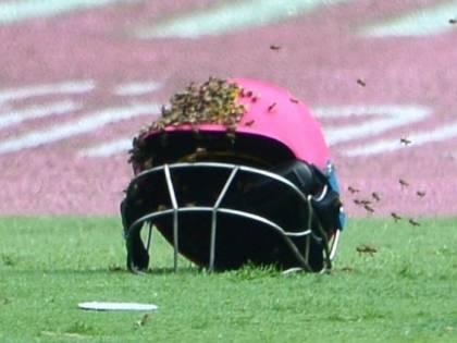 Sciame di api sul campo di cricket: sospeso il match Sudafrica-Sri Lanka