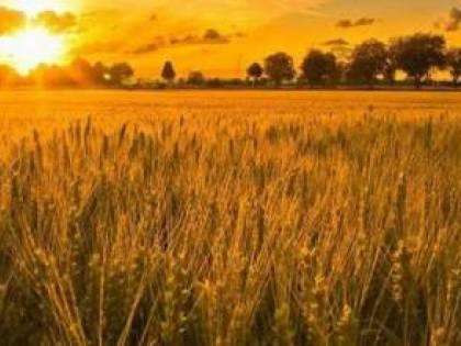 Bari, il grano canadese non è contaminato
