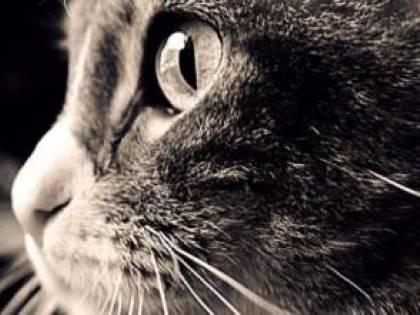 Cercasi accarezzatore di gatti in Grecia