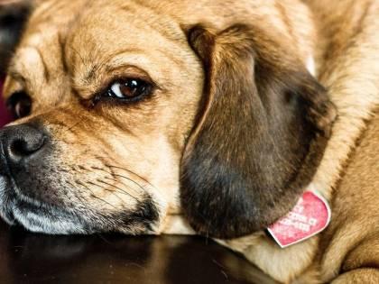 """Ottiene due giorni di permesso dal lavoro per curare il suo cane: """"Grave motivo familiare"""""""