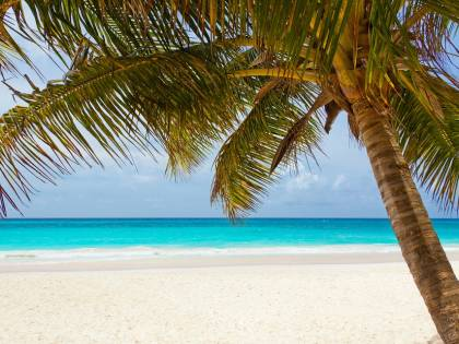 Rimini, azienda festeggia i successi portando i dipendenti ai Caraibi