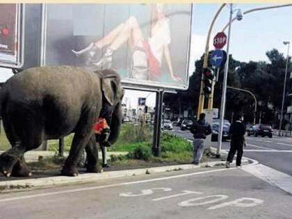 Bari, a spasso con un elefante