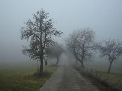 Nebbia friulana in barattolo: la comprano in tutto il mondo