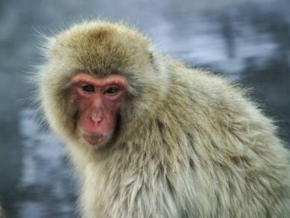 Gas di scarico testati sulle scimmie: auto tedesche sotto accusa