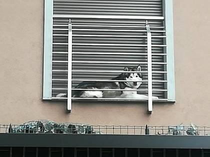 Milano, cane chiuso in balcone minuscolo: denuncia di una cittadina