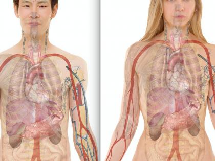 È umana solo la metà del nostro corpo
