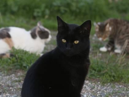 Il villaggio della Nuova Zelanda che vuole abolire i gatti